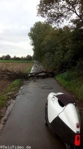 Baum über Radweg